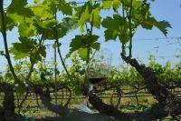 Conti Zecca tra i 100 vini più amati